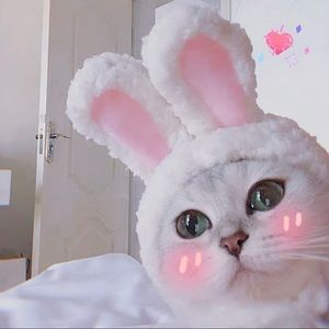 Bunny Hat for Cats&Dogs